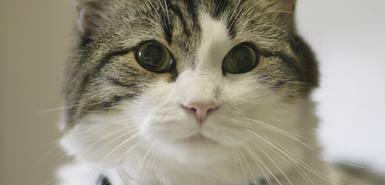 oscar_cat_191844a.jpg